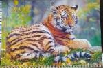 """Календарь  с окошком 1 пружина """"Взьерошенный тигр"""""""